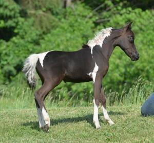 Trendi baby photo 1