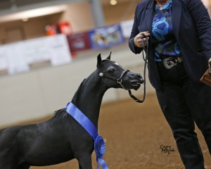 Nationals 2015 ShutUp with ribbon in ring