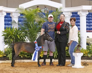 Worlds 2015 Charlotte National Champion Amateur Sr Mare