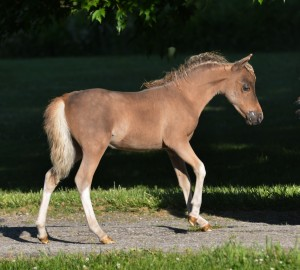 Mattys 2016 filly rightside1